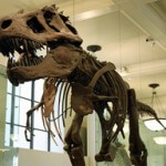 Don't let Your Loyalty Program Become a Dinosaur